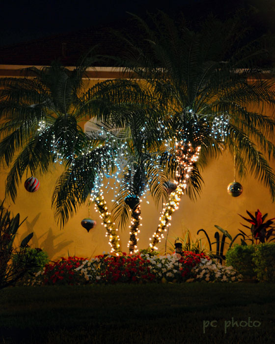 triple palm christmas lights****