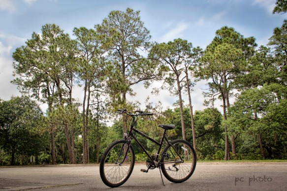 #3 Loneliness:abandonment Bicycle Adjust1