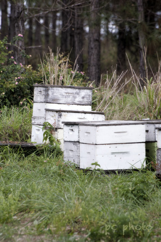 Countryside  : Bee Hives1
