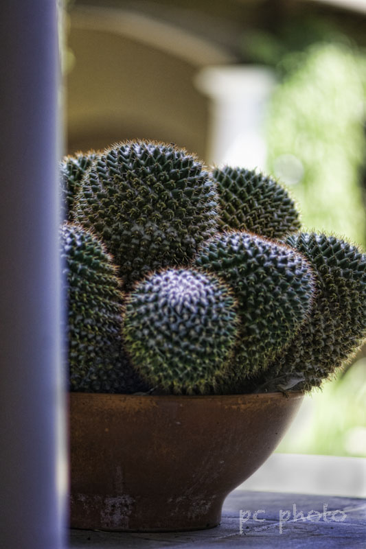 Curves - Bowl of Cactus