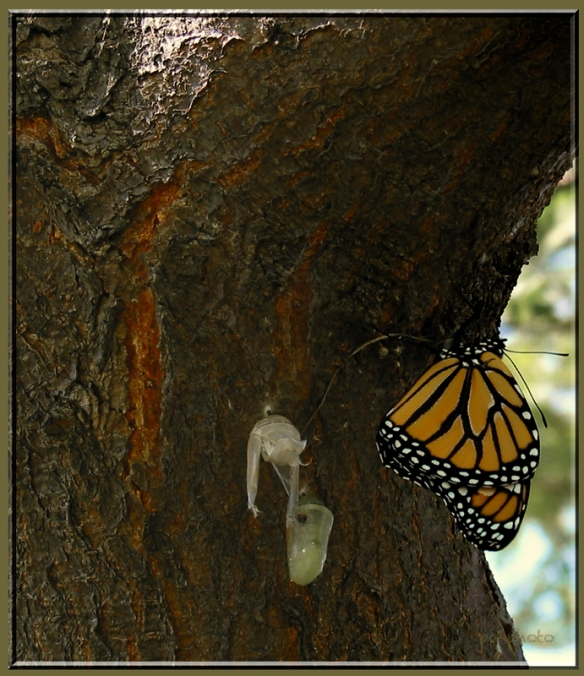 new born butterfly1