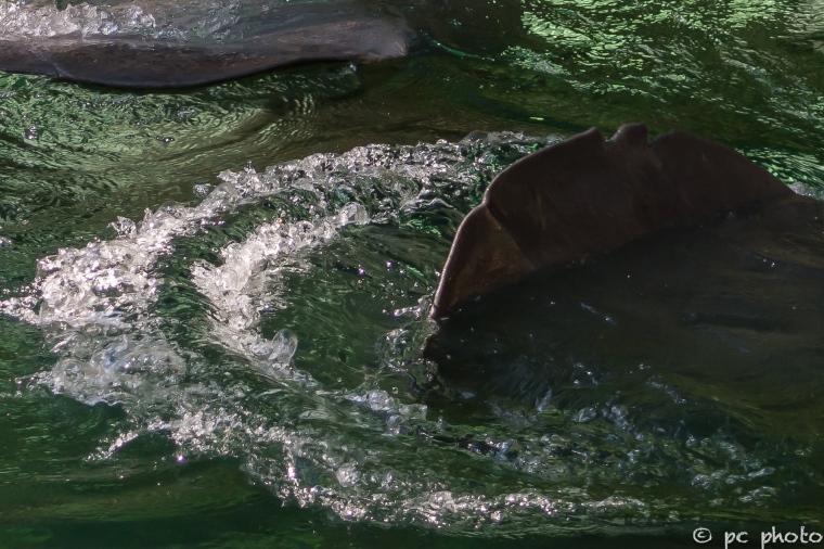 #4 Tail Splash -2292