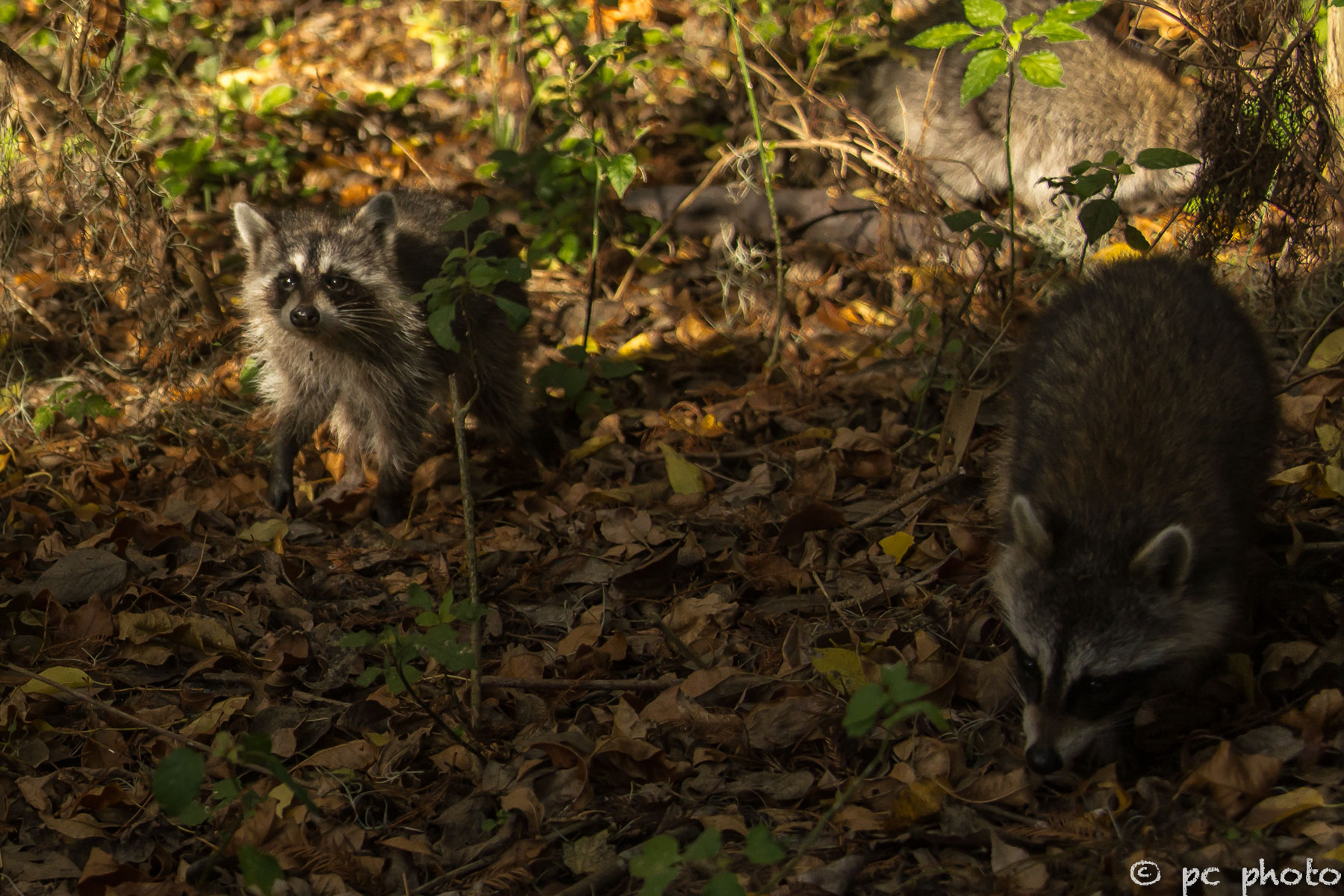 Forest Bandits – PC PHOTO