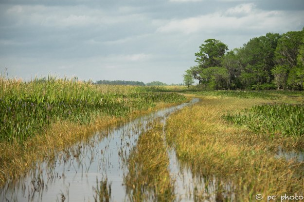 airboating through the marsh