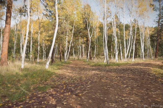 Aspens:Here comes the sun:Flagstaff AZ -