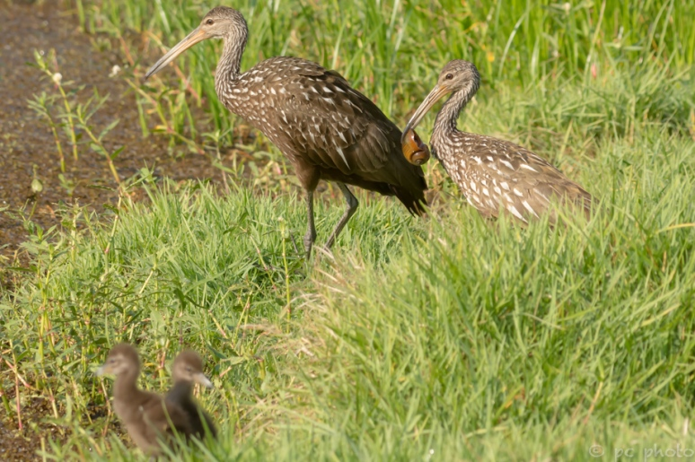 7 -  time to cross the marsh - follow us_DSC4538-2