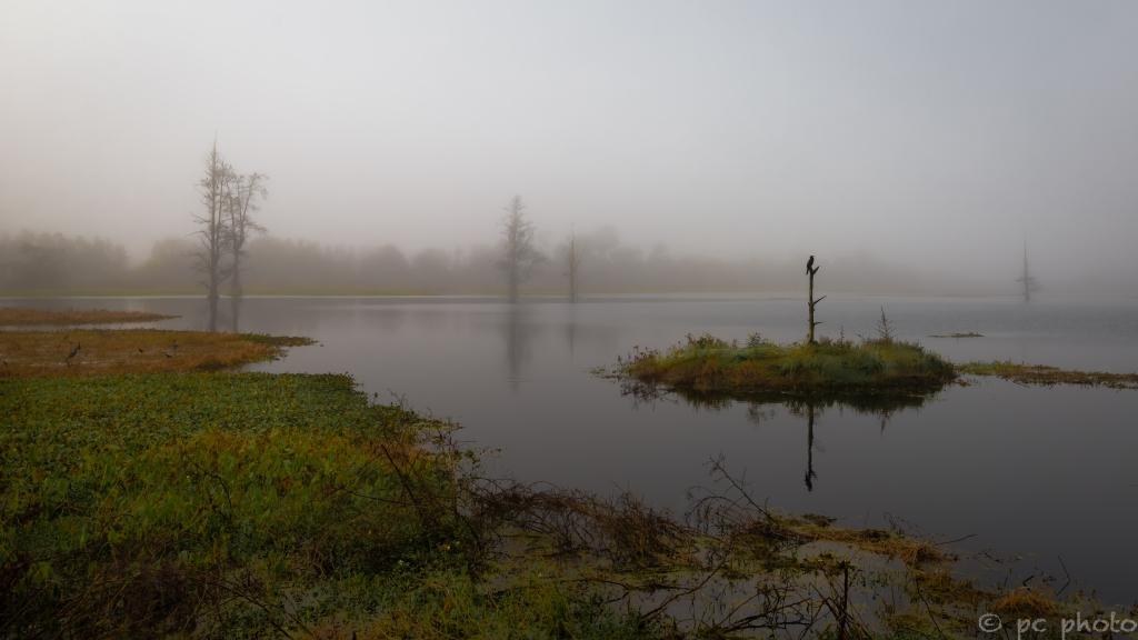 foggy morning on the marsh