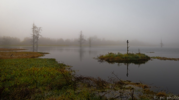 foggy morning on the marsh