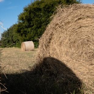 19-rolls-of-hay-2951