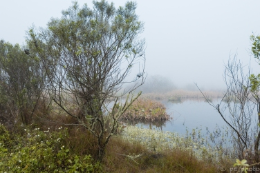 7-fog-on-the-marsh-3019