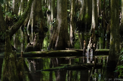 1-peace-in-the-swamp-8472