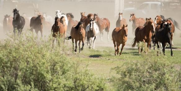 8 stampede-7555-2.jpg