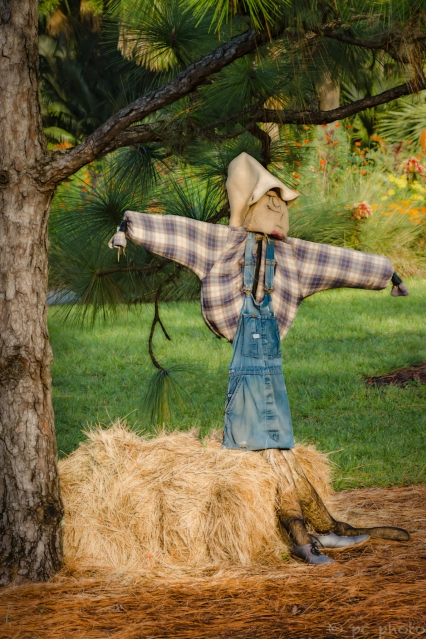 scarecrow under the pine tree-