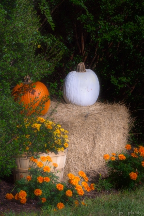 white pumpkin-